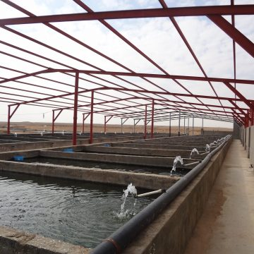 Holland Aqua Saudi Arabia fish farm tilapia