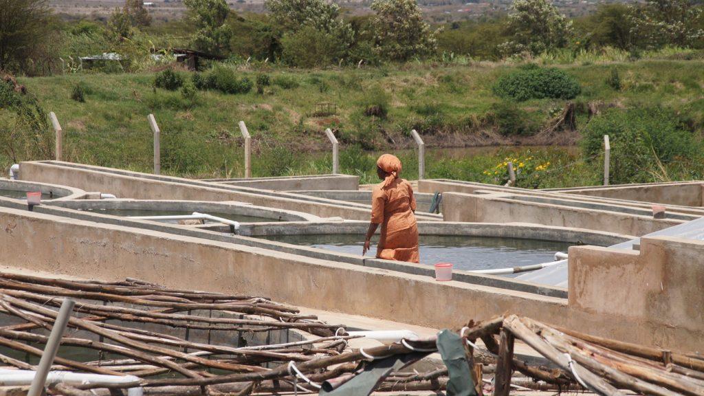 Feasibility study: Fish farming methods for Kenya