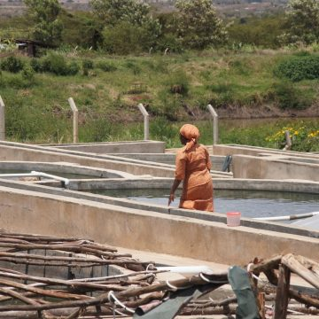 Kenya engineering study fish production
