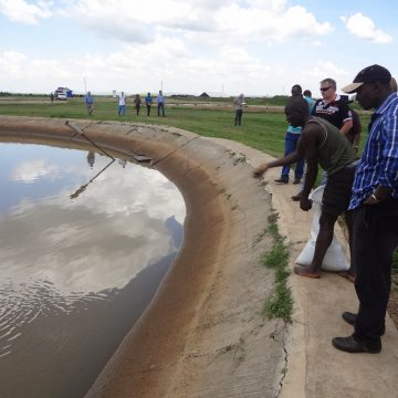 Research Kenya fish farming methods