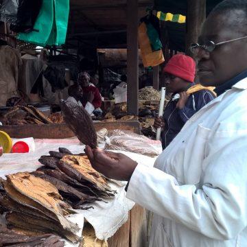 Holland Aqua food safety protocol aquaculture Kenya