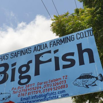 Holland Aqua Tanzania RAS Fish farm aquaculture tilapia BigFish